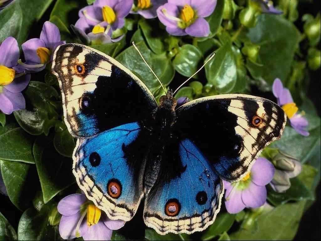Limonchiflado la leccion de la mariposa - Images de papillon ...