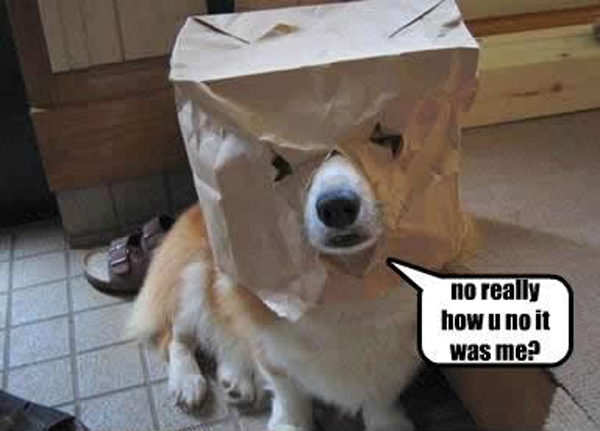 Very funny dog pictures
