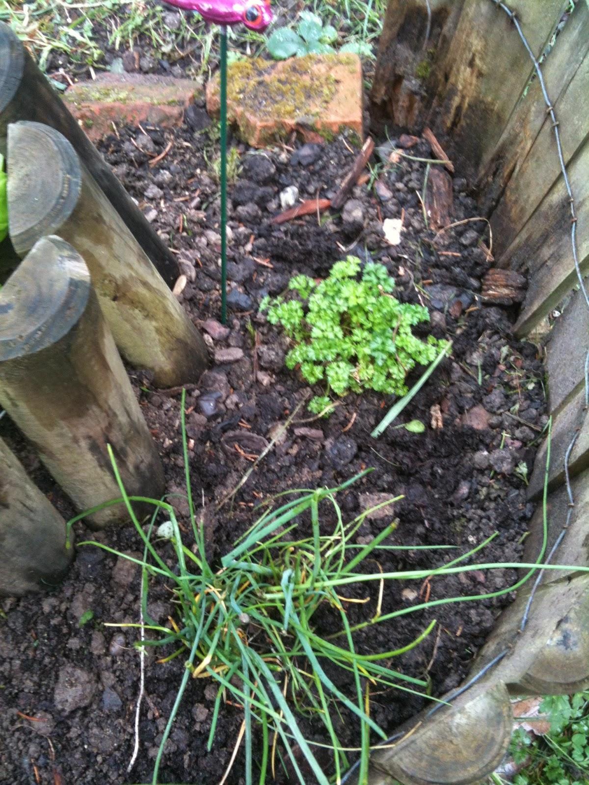 Les diy de fishounette petit jardin aromatique en colima on - Petit jardin aromatique ...