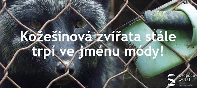 http://www.protisrsti.cz/dokumenty/Letak_obecny_FINAL.pdf