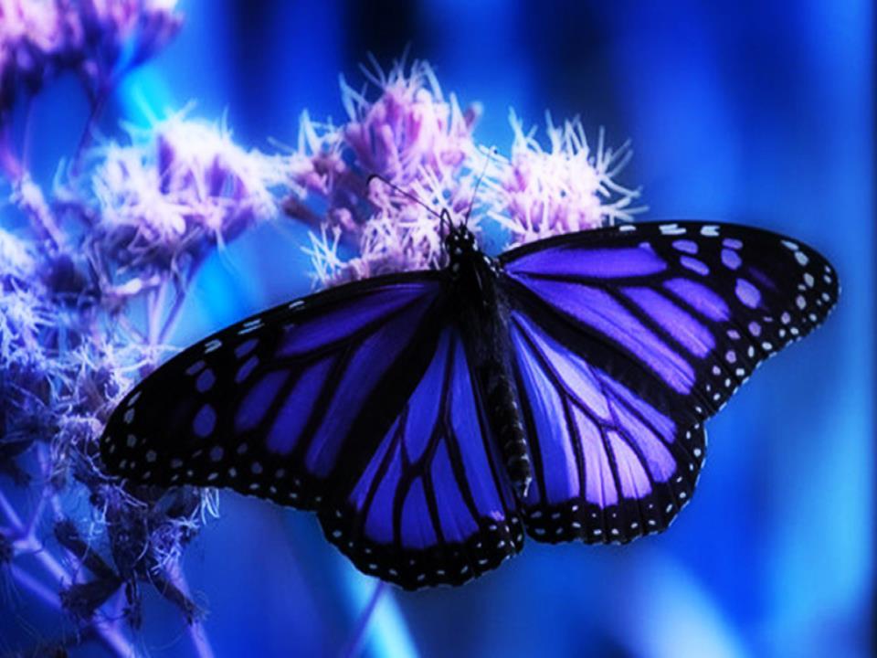 Fotos de mariposas mariposas de colores wallpapers hd - Imagenes de mariposas de colores ...