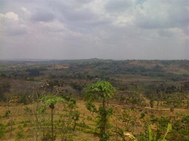 Hamparan pemandangan alam Kabupaten Tuban dari atas 'pucuk' bukit.