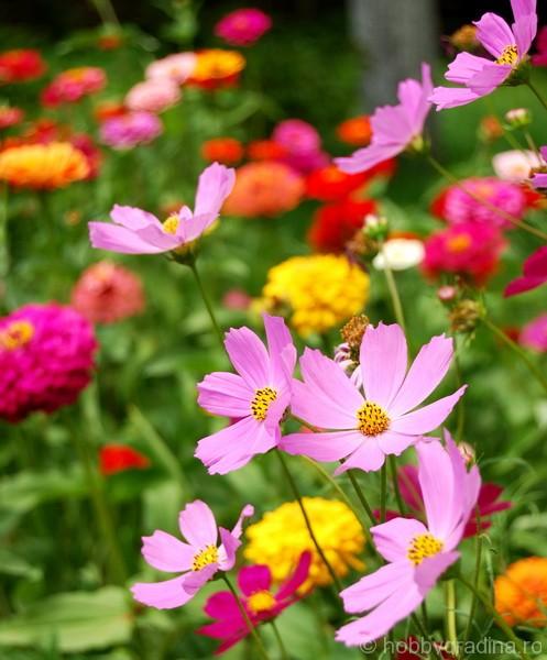 Florile gandului...
