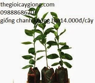 Cây giống Việt Nam