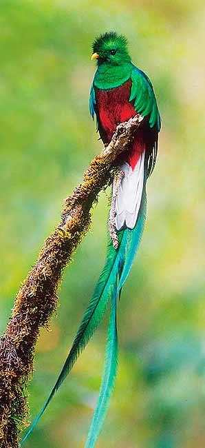 Animales en Extincion - Peligro - Todos Podemos Hacer Algo