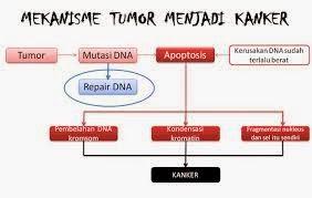 Pengertian Jenis Jenis faktor Dan Cara Pengobatan Tumor Dan Kanker Prostat