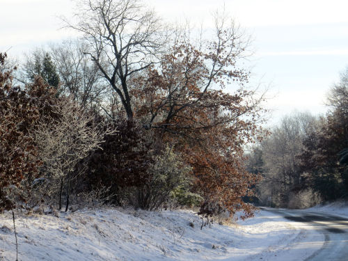 sun on icy trees