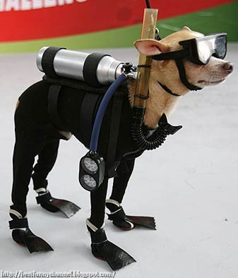 Dog commando