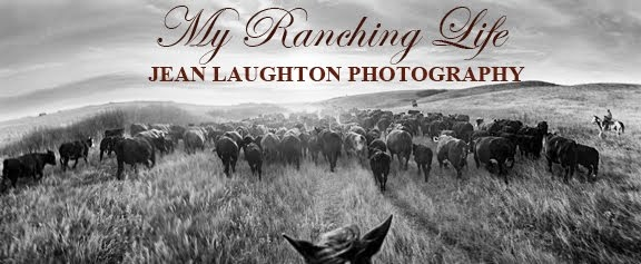 My Ranching Life