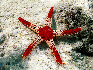 Star Colors Underwater