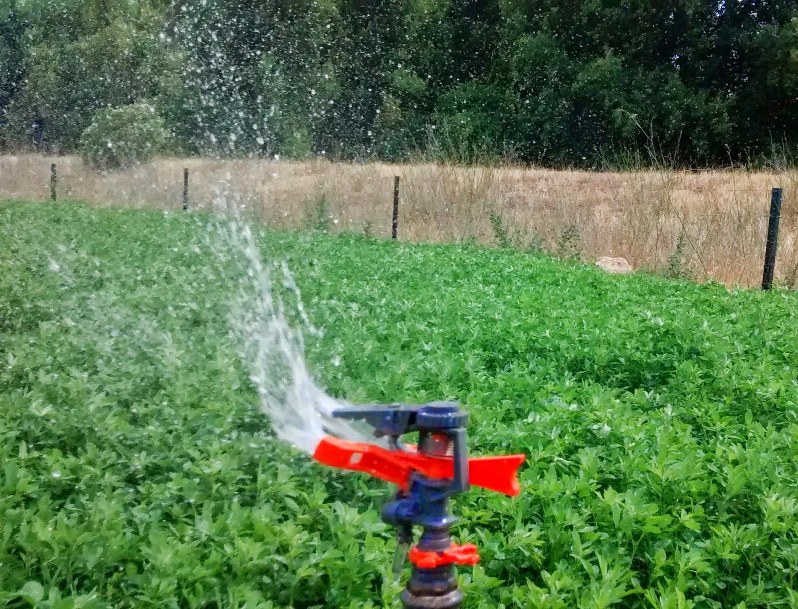 Todoproductividad proyectos de riego solar for Aspersores para riego