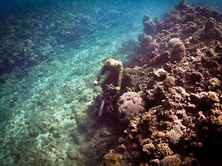Jardines de esculturas submarinas