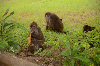 monkey finishing banana