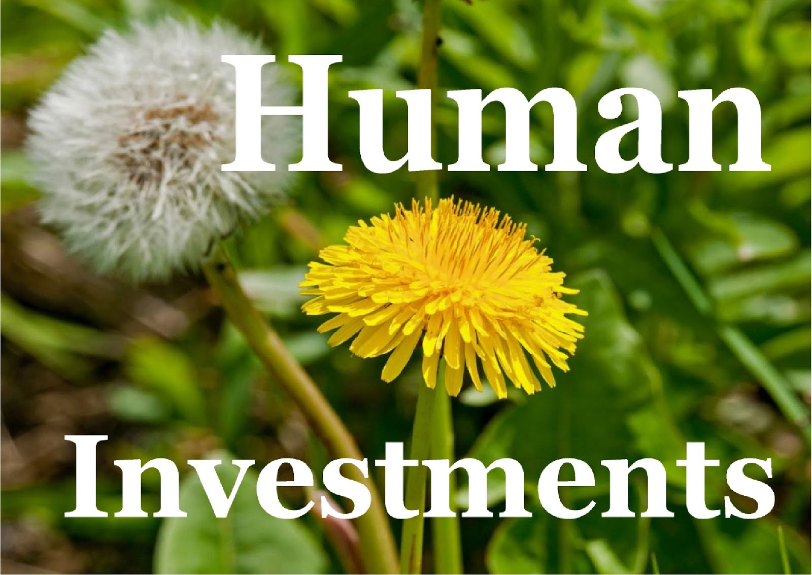 Human Investments