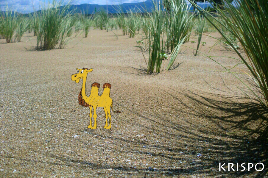 dibujo de camello sobre duna en playa de hondarribia