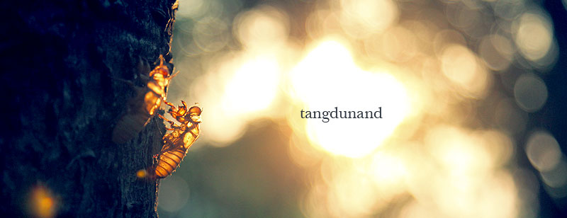 TANG DUNAND