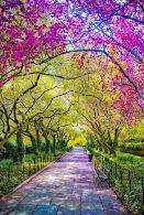 Só pela via do Amor consegue-se  paz de espírito