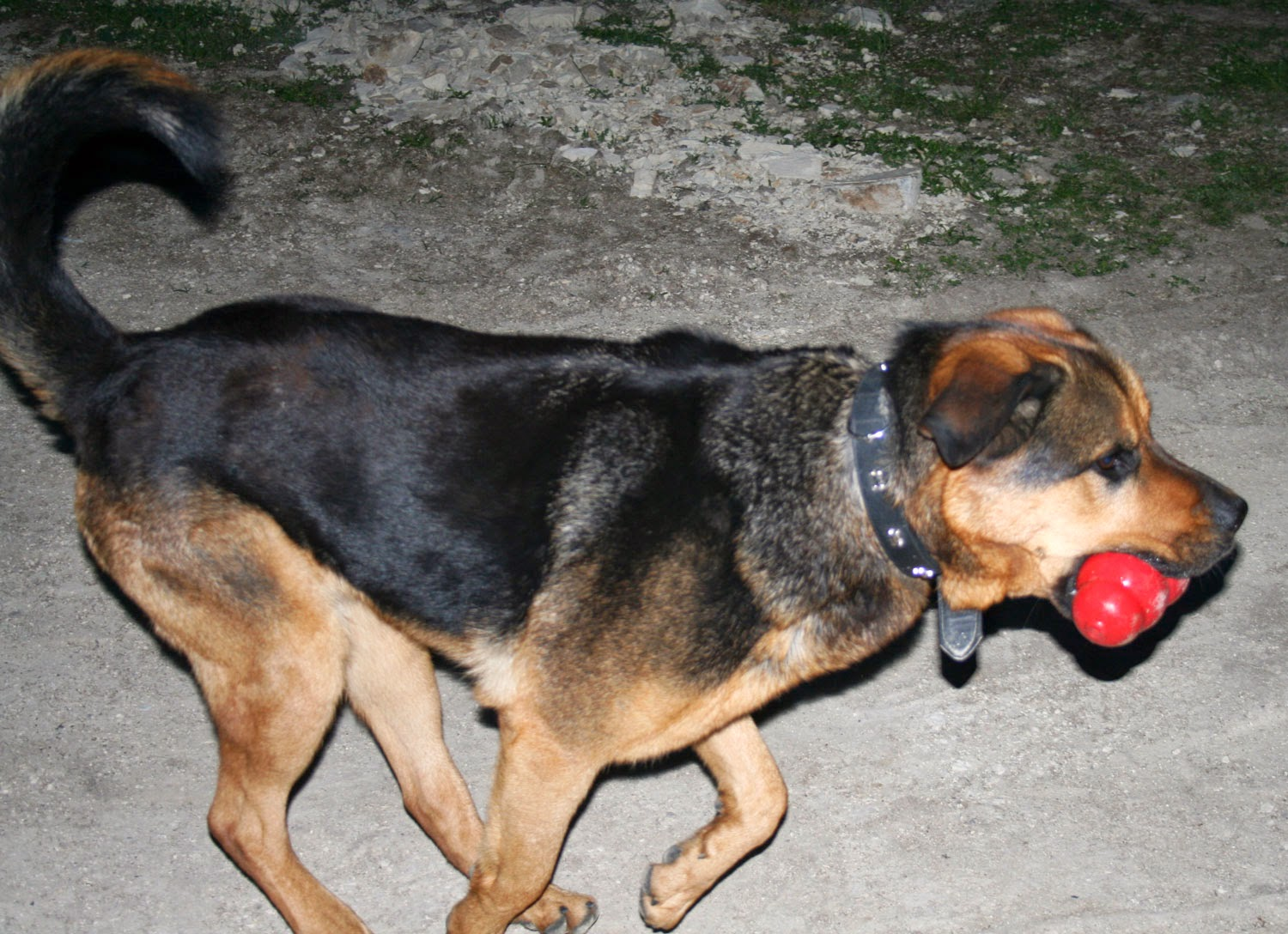 Rambo returning with his Kong