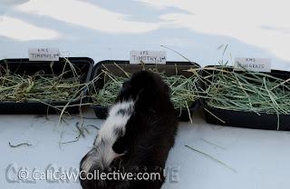 timothy hay comparison