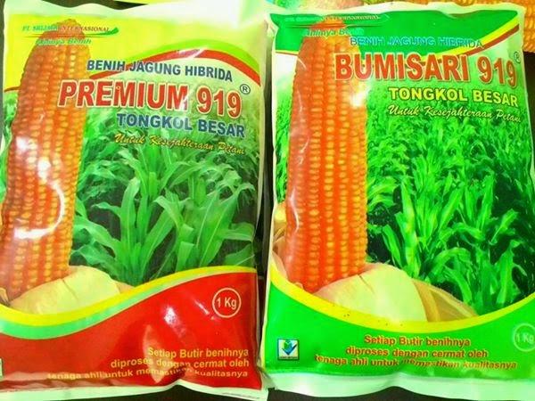 Benih jagung - Cara memilih benih jagung hibrida