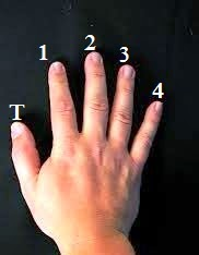 fingerNumbering_lefthand_guitar