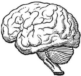 A black-and-white drawing of the human brain