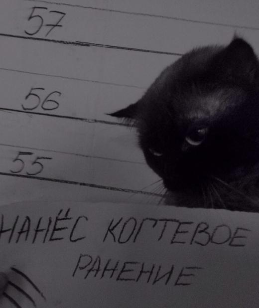 Кот - Отпетый рецидивист
