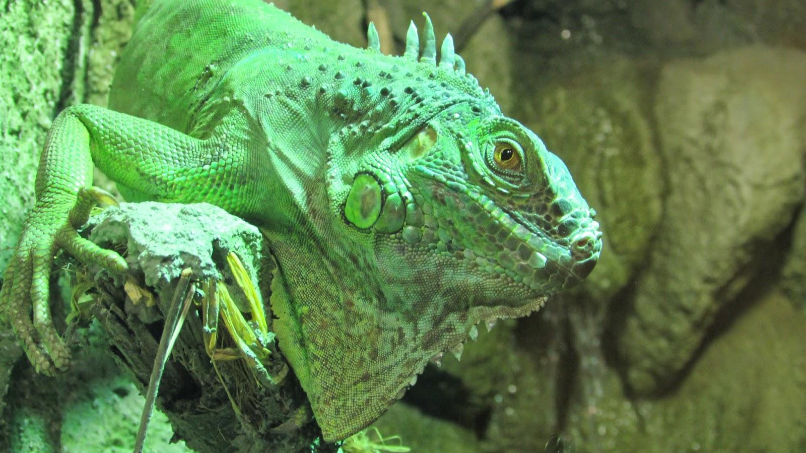 Terrarium i Zoo w Myślęcinku