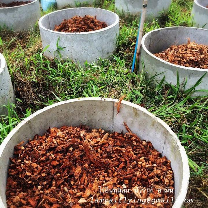 figs farm
