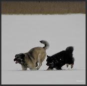 Koiran elämänohjeet