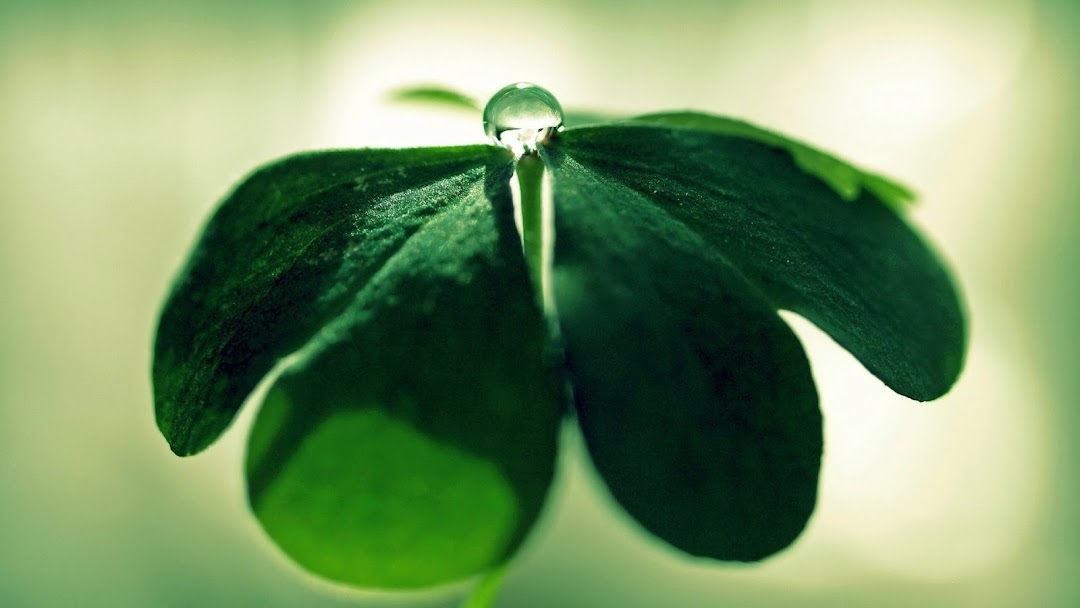 Leaves Macro HD Wallpaper 5
