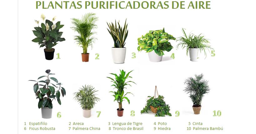 Una casa sana plantas purificadoras de aire for Plantas ornamentales para colorear