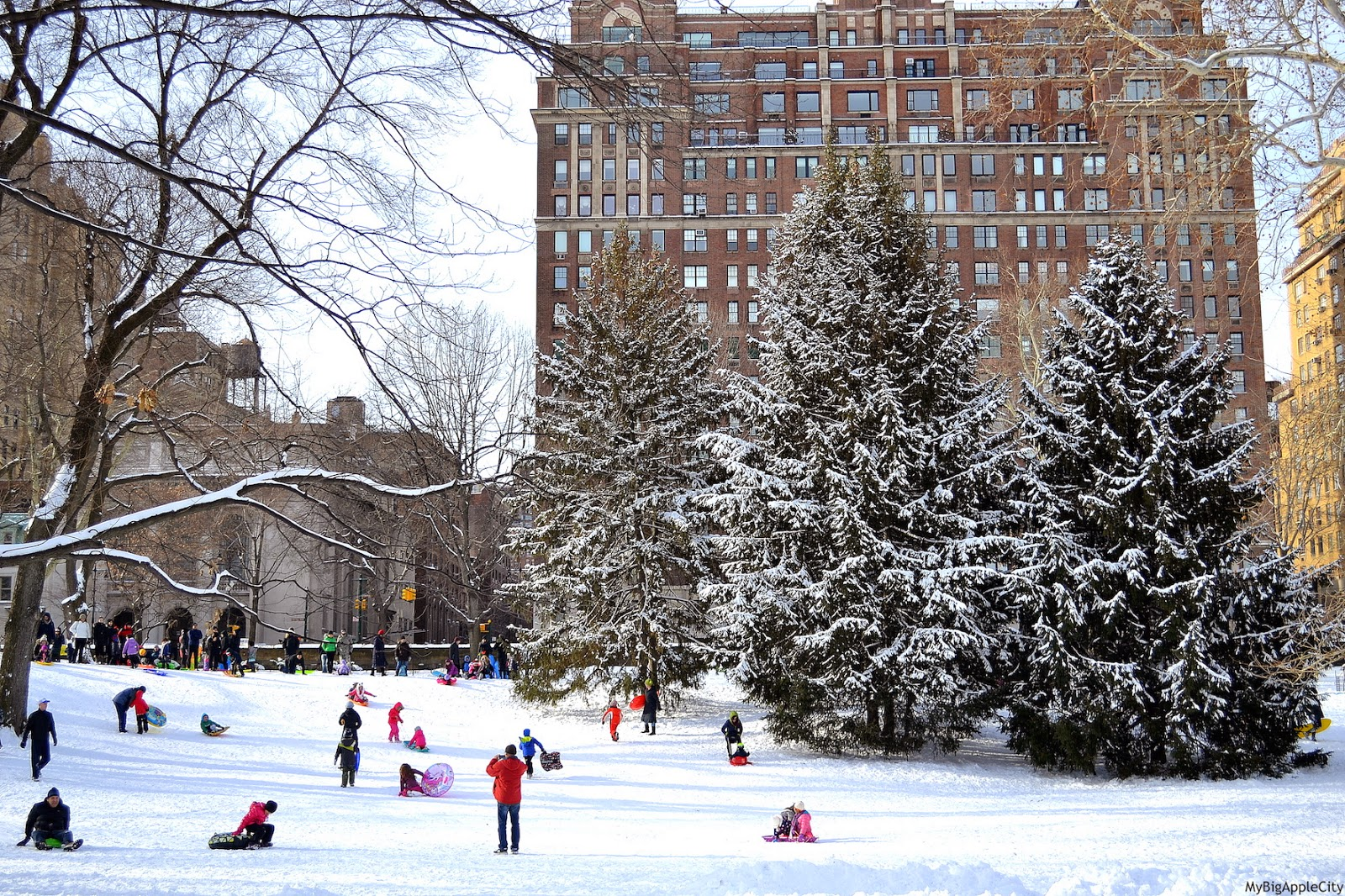juno-2015-NYC-Blizzard-Central-Park-New-York