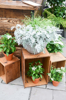 Greens at Club Monaco summer market from Sweet woodruff, Toronto