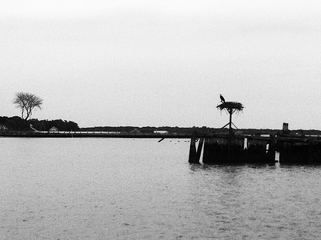 Osprey nest at Goose Creek  (North Fork of Long Island Sound)