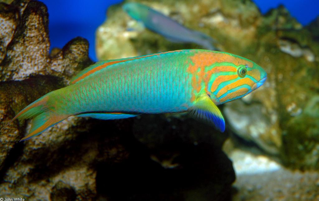 BANANA FISHの画像 p1_36