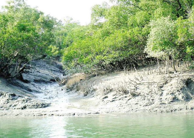 Flora and Fauna of Sundarban
