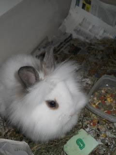 Tutto coniglio - Lettiera coniglio nano ...
