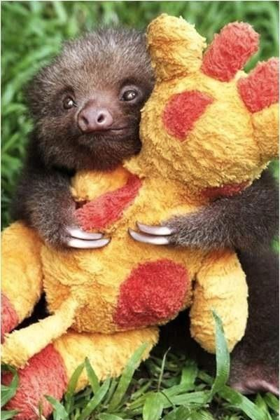 Imágenes de Ositos Imágenes de Amor - imagenes de animales lindos