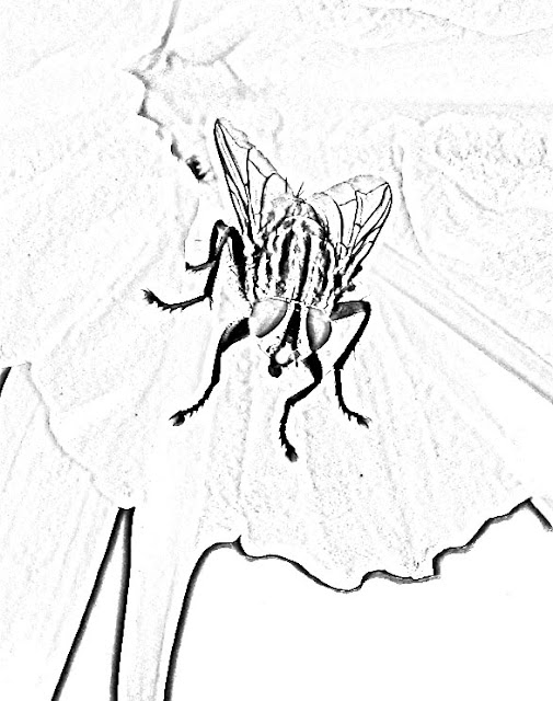 sketch of fly on flower