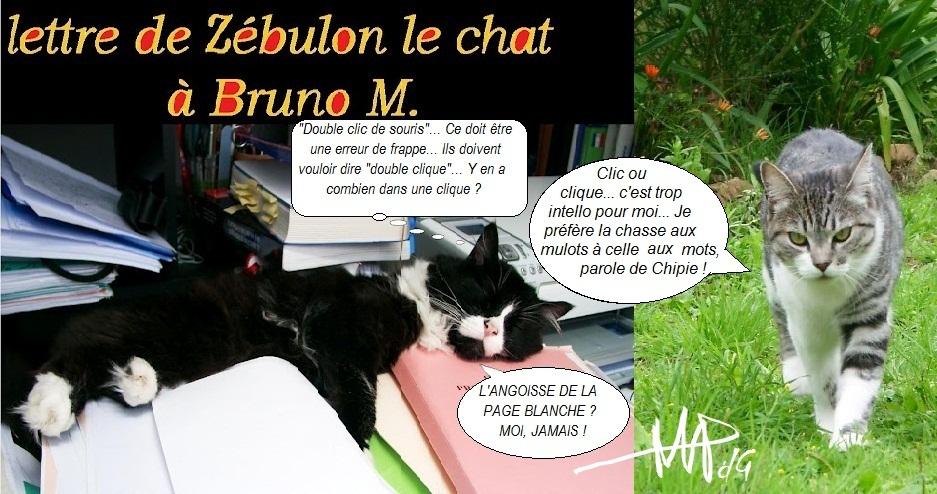lettre de Zébulon le chat à Bruno M.