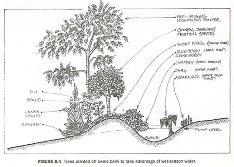Temperate climate permaculture permaculture projects swales for Garden soil definition