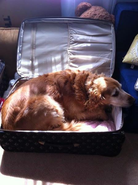 anjing dan kucing di koper