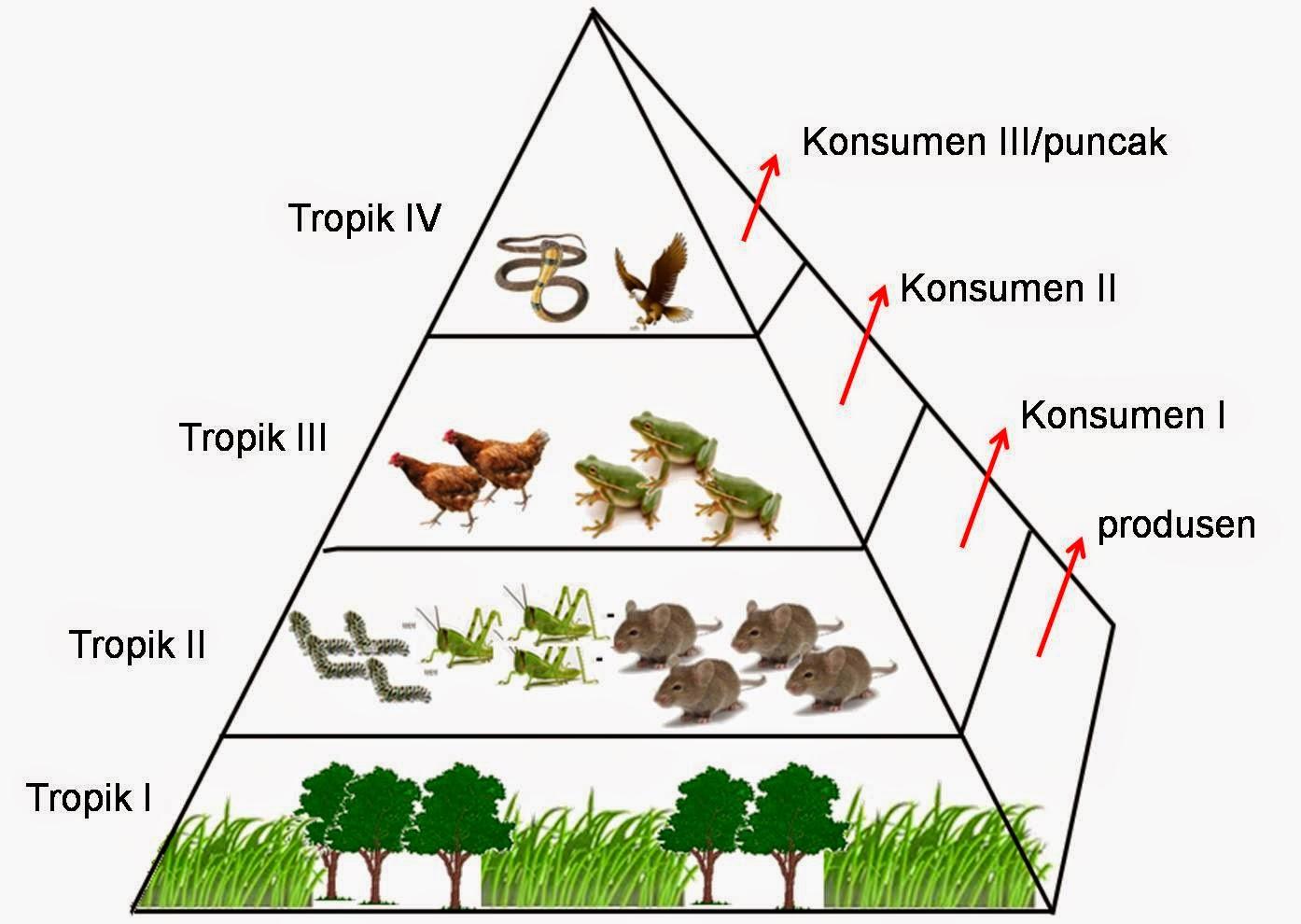 TripleT: Laporan Pengamatan Ekosistem Kebun