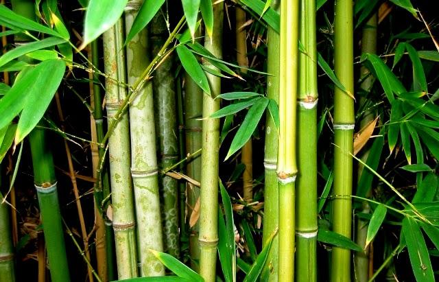Mybeautifuliloilo Maasin Bamboo Capital Of Iloilo