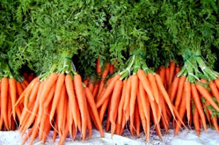 Carrots Plants