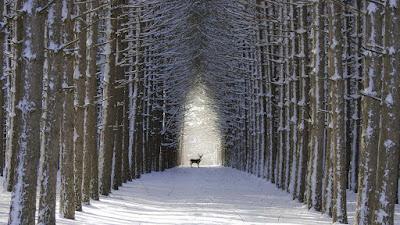 dear-animal-enjoing-winter-season
