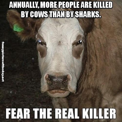 Annually More People Are Killed By Cows Than By Sharks Fear The Real Killer Funny Shark Week Humor