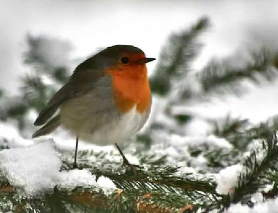 Bird garden il giardino amico degli uccelli giardiniere bioetico - Sacchi di terra per giardino ...