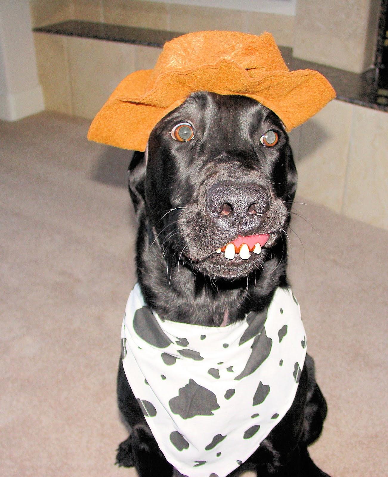 Dr. Debbie: Pet Halloween Costumes: Spook-tastic or Just Crazy?